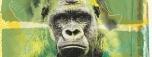 A Nascente de Monkey Jhayam