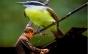Relação entre música e sons da natureza é tema de bate-papo e recital em São Paulo