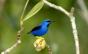 Fotógrafo Edson Endrigo retrata em livro mais de 220 espécies de aves da Amazônia