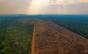 A destruição da Amazônia nos afeta de diversas maneiras, relata ambientalista