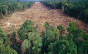 Desmatamento não surpreende, indícios eram péssimos, afirma ambientalista