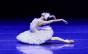 São Paulo Companhia de Dança estreia temporada 2020 online