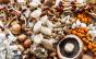 Saiba escolher, armazenar e higienizar cogumelos para alimentação