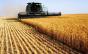 Mesmo com o crescimento no setor alimentício, produção agrícola foi prejudicada com a pandemia
