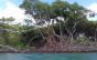 Ambientalista aponta desmonte injustificável após Conama derrubar proteção a restingas e manguezais