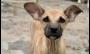 Saiba como ajudar animais de rua