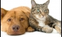 Pesquisa mostra que gatos são melhores que cães