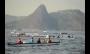 Botos da Baía de Guanabara estão entre os animais mais contaminados do mundo