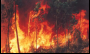 Especialista do Observatório do Clima fala sobre falta de políticas ambientais no Brasil