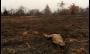 O que há por trás do surto de incêndios florestais no Brasil?