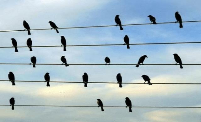 Foto - Pássaros